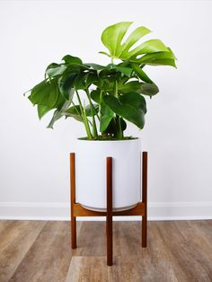 Buy a Monstera deliciosa , its incredibly forgiving and will tolerate all kinds of neglect including low light, poor soil, and inconsistent watering Monstera Deliciosa, Garden Living, Diy Garden Decor, Plant Decor, Indoor Plants, Pot Plants, Decoration, House Plants, Room Decor