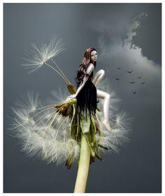 dandelion by maoam on DeviantArt