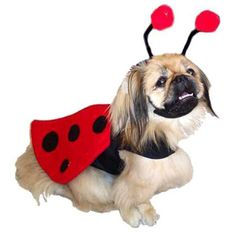 """A little ladybug has landed and brought good luck in tow, so, give it a cheery """"Hello!"""" Delightful Lady Bug Costume Ensemble for your pup is sure to bring good luck and lots of smiles to your day! Siz"""