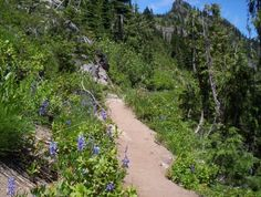 and lots of hikes......Pacific Crest Trail