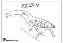 Desenhos De Aves Brasileiras Para Colorir Desenhos De Aves Aves