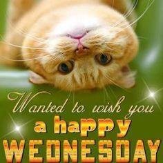 Happy Wednesday Pictures, Wednesday Hump Day, Wednesday Greetings, Blessed Wednesday, Happy Wednesday Quotes, Good Morning Wednesday, Wednesday Humor, Wonderful Wednesday, Good Morning Good Night