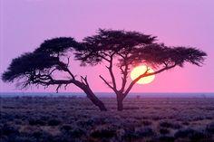 Amazing Namibia Nature