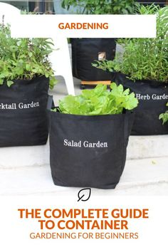 Container gardens make it possible to plant your garden late in the season, and still have a beautiful and successful harvest. Learn everything you need to know about starting your container vegetable garden with our Complete Guide to Container Gardening for Beginners. #containergarden #containergardening #gardenkit #herbgarden #growbag #gardeningkit #gardening #plants #growyourownfood #DIY Garden Soil, Water Garden, Vegetable Garden, Garden Plants, Growing Greens, Growing Plants, Fall Containers, Plant Health, Container Gardening Vegetables