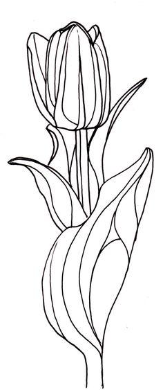 Line Drawing Of Tulip Flower : Line drawing flowers gardenia drawings pinterest