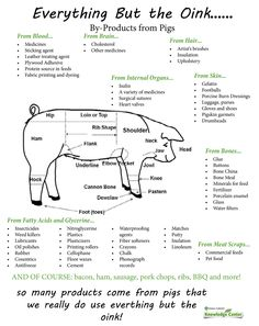 Everything But the Oink...pigs are incredibly versatile animals - we really do use everything but the oink!  Great educational tool