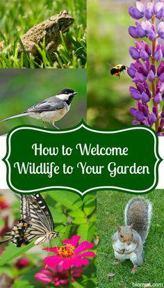 Welcome Wildlife to the Garden #gardening #wildlife #animals
