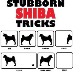 Is a shiba right for you? — Midwest Shiba Inu Rescue-- LOL