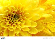 Amarelo da natureza