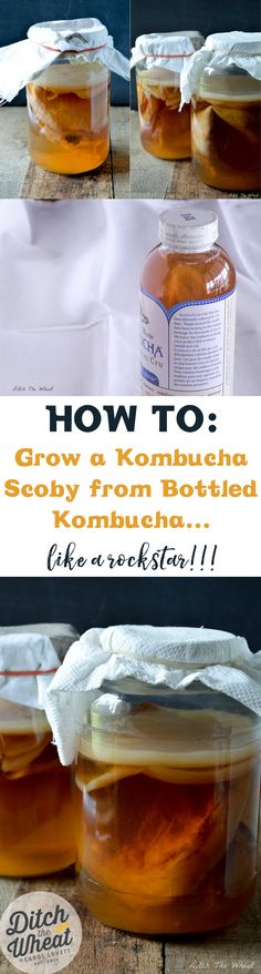 Learn How to Grow a Kombucha Scoby in this post. You need a scoby to ferment the tea to brew kombucha, a beverage filled with probiotics. Kombucha Scoby, Kombucha Recipe, Kombucha Brewing, Raw Food Recipes, Cooking Recipes, Healthy Recipes, Freezer Cooking, Freezer Recipes, Drink Recipes