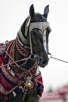 Turkmenian tack for horses