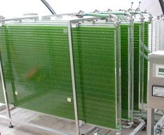 This is a compact Plate photobioreactor that is growing spirulina : REUSE old Sliding glass doors for Max sun exposure in premade waterPROOF thin aquarium