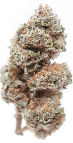 Blackberry Marijuana Strain Review; Strain Overview The Scoop: Creating a striking equilibrium between the Indica and Sativa gene pools, Blackberry is a masterful cross between the forceful Black Domina and the ever-popular Raspberry Cough. Marijuana / Cannabis / Strain / Review / Overview