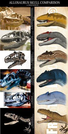 Jurassic: different Allosaurus Species and variants by FredtheDinosaurman T Rex Jurassic Park, Jurassic World Dinosaurs, Jurassic Park World, Prehistoric Dinosaurs, Prehistoric World, Prehistoric Creatures, Dinosaur Drawing, Dinosaur Art, Dinosaur Fossils