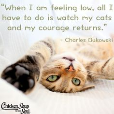 """From Chicken Soup for the Soul: What I Learned from the Cat """"Courage in a Small and Furry Package"""" """"I got the call one day after school. My father had seen a little black and white kitten at the animal hospital where he used to work as a veterinarian before he started his own practice."""" Read more: http://www.chickensoup.com/book-story/31624/27-courage-in-a-small-and-furry-package"""