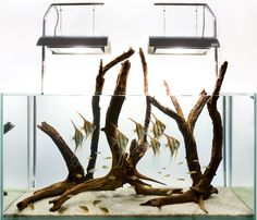 Aquarium Design Group - An Altum angelfish hardscape