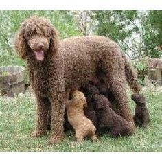 Mommy and babies