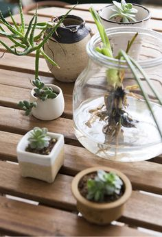 Use plants and natural objects of all shapes and sizes