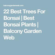 22 Best Trees For Bonsai | Best Bonsai Plants | Balcony Garden Web