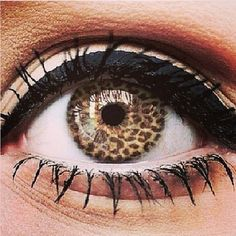 Beauty Inspiration | Leopard Print Contact Lens http://www.nicethingbeauty.com/