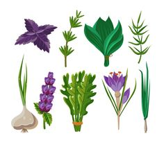 Set of 9 vector herbs by TopVectors on @creativemarket