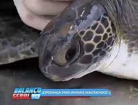 """O GRITO DO BICHO"": Clínica recebe 1.600 animais por ano vítimas de ma..."