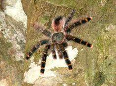 fauna brasileira - Cerca con Google