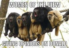 These monkeys are cute though....you can't even see the lies and bullshit coming out their mouths!