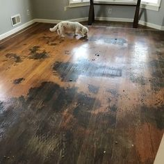 To Remove Years Worth Of Carpet Glue And Ground In Dirt On