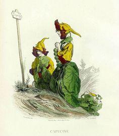 Спокойные Настурции, также называемые капуцинами