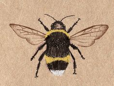 Illustration of a bumble bee as part of a personalised Treasures piece. See more here