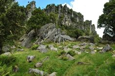 Mangaotaki, Waikato, New Zealand-home to Trollshaw Forest in the Hobbit