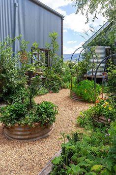 Garden Beds, Garden Art, Home And Garden, Potager Garden, Garden Plants, Potted Fruit Trees, Grow Food, Cottage Garden Design, Open Art