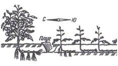 Metodele Maslov sau cum să creștem de zece ori producția de roșii Garden Pool, Hair Accessories, Solar, Mai, Gardening, Nicu, Pools, Plant, Lawn And Garden