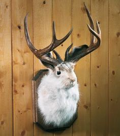 Jackalope Mount. I want this soo bad!!! Hopefully one day my husband will shoot me one (just kidding).