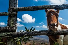 Mount Rogers, Virginia, USA