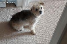 Este perro que al arrastrar el trasero hizo el movimiento más importante del año. | Los 47 GIFs de perros más increíbles de 2013