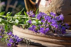 10 Ways to Use Hyssop Essential Oil - Lindsey Elmore Hyssop Essential Oil, Small Evergreen Shrubs, Spiritual Cleansing, Facial Cleansers, Childproofing, Just Relax, Professional Business Cards, Blue Flowers, A Table