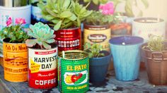 How to Build a Balcony Garden on a Shoestring Budget
