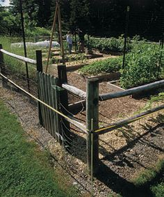 Deer-Proof Electric Fence: Just a bit shocking, this simple fence can keep deer from devouring your vegetables l Paul D. Curtis l Fine Gardening Fine Gardening, Small Space Gardening, Gardening Tips, Vegetable Gardening, Porches, Container Food, Deer Fence, Garden Drawing, Garden Projects