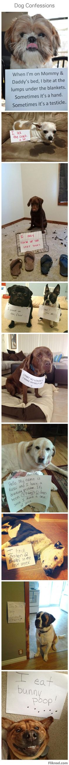 Dog confessions
