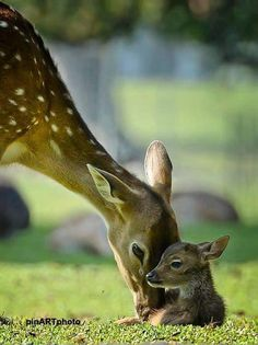 doe and her baby fawn.