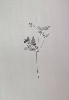Small A4 handmade original botanical nature mono print by Stef Mitchell.  Herb Robert.  Minimal and delicate floral art Black ink by fieldandhedgerow on Etsy https://www.etsy.com/au/listing/513098440/small-a4-handmade-original-botanical