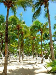 Playa del Carmen, Mexico.. want to go back just to find these hammocks!