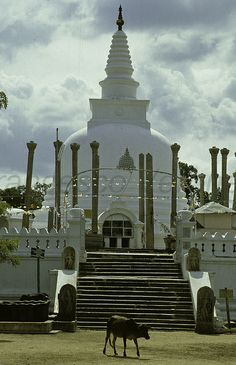 Anuhradapura temple - Sri Lanka