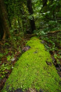moss in the forest~