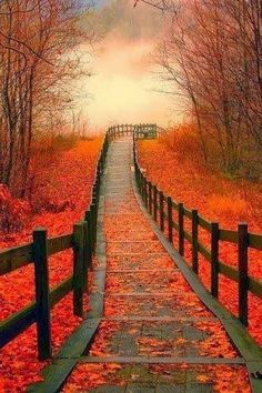 ~Lori : Photo Autumn Walk