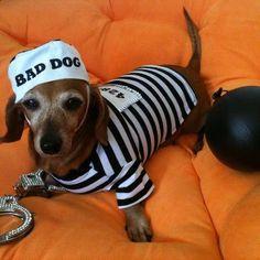 Ba-ba-ba-baaaad to the bone! If Milo doesn't start behaving this is next years costume