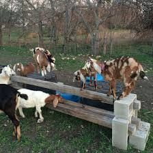 Bildresultat för diy pallet goat play structures