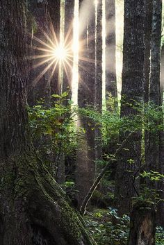 Sunstar, Pacific Northwest, Washington